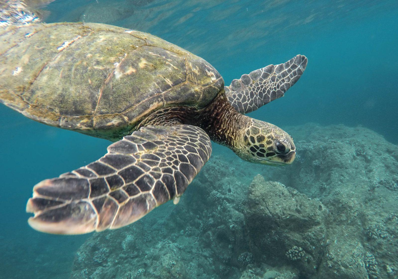 East Coast of Australia Great Barrier Reef
