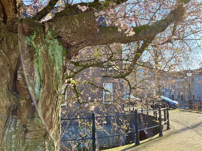 Tree city guide 's-Hertogenbosch