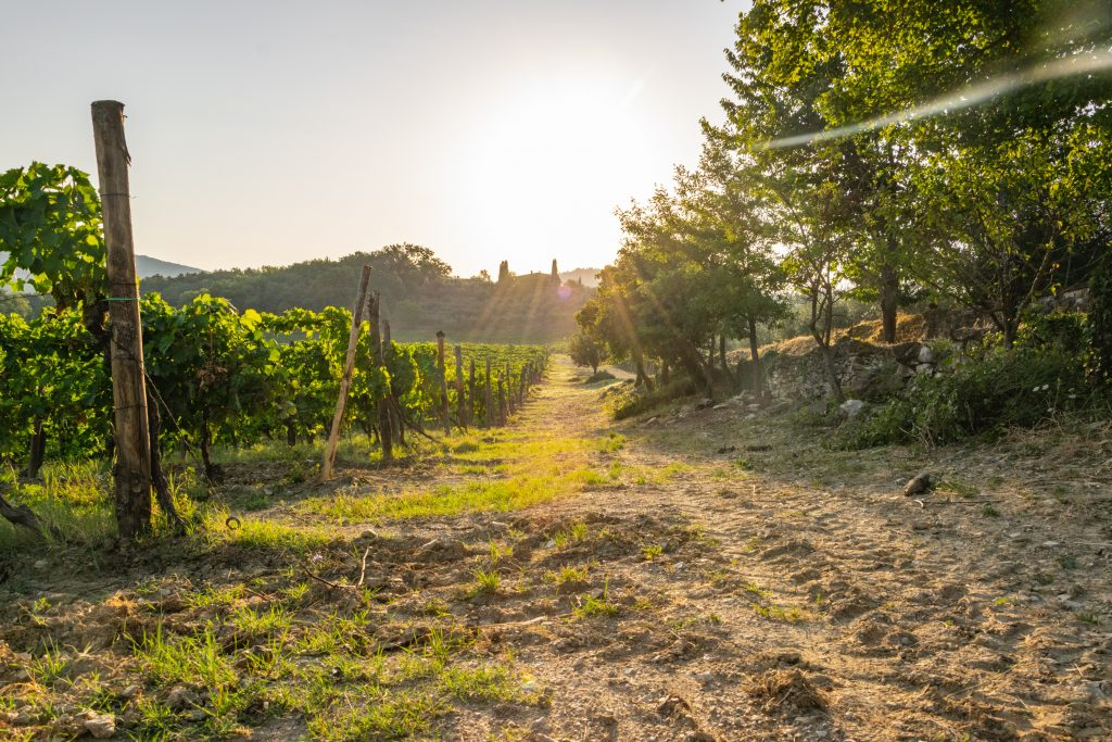 vineyard Italy - things to do in Europe